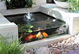 Aquarium & Pond Products